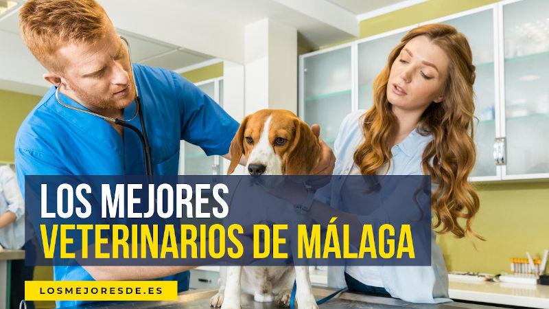 mejores clínicas veterinarias de Málaga